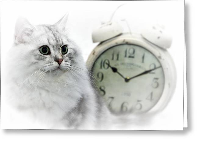 Familiar Greeting Cards - British Longhair Cat Time Goes By II Greeting Card by Melanie Viola