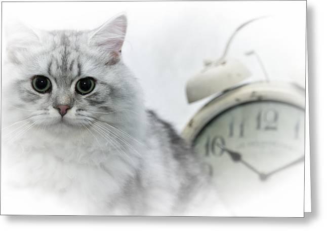 British Longhair Cat Time Goes By Greeting Card by Melanie Viola