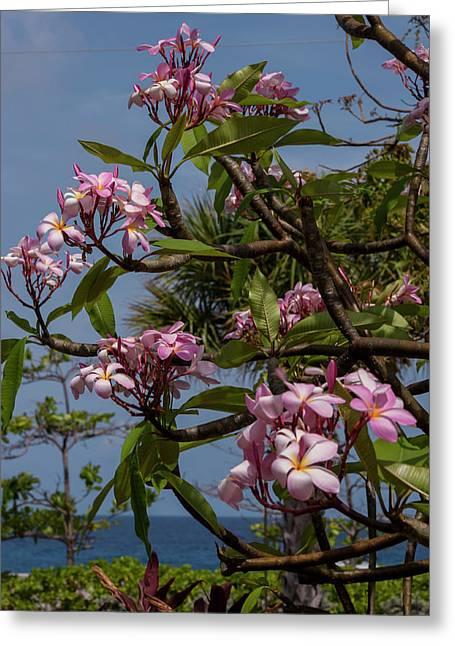 British West Indies, Cayman Islands Greeting Card by Lisa S. Engelbrecht