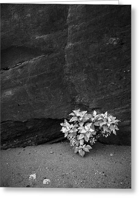 Contest Winner Greeting Cards - Brittlebush and Slot Canyon Wall Greeting Card by Alexander Kunz