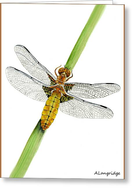 Demoiselles Greeting Cards - Broad-bodied Chaser Yellow Dragonfly Greeting Card by Alison Langridge