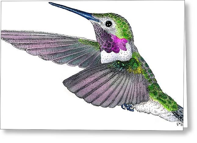 Broad-tailed Hummingbird Greeting Card by Roger Hall
