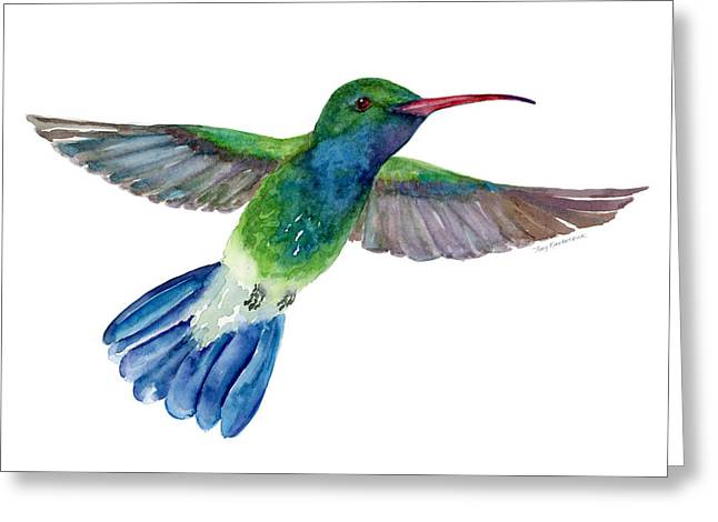 Spreads Greeting Cards - BroadBilled Fan Tail Hummingbird Greeting Card by Amy Kirkpatrick