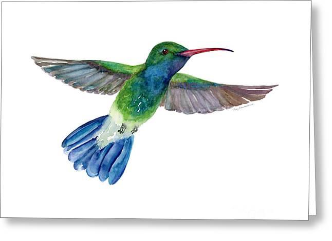 Broadbilled Fan Tail Hummingbird Greeting Card by Amy Kirkpatrick