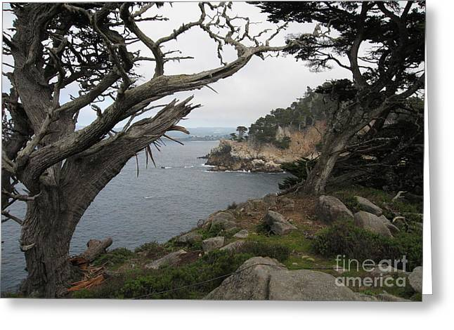 Point Lobos Reserve Greeting Cards - Broken Cypress Greeting Card by James B Toy