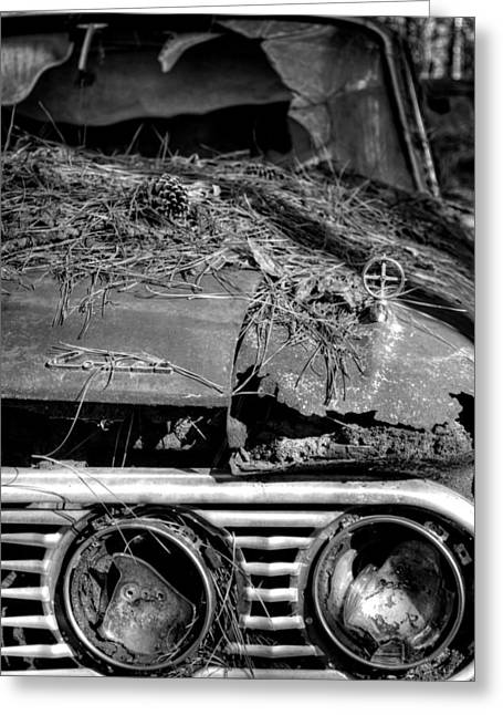 Pine Needles Greeting Cards - Broken Headlights of a Comet in Black and White Greeting Card by Greg Mimbs