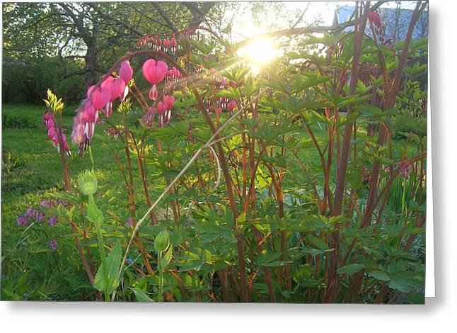 Flovers Greeting Cards - Bleeding heart Greeting Card by Paivi Ruokolainen