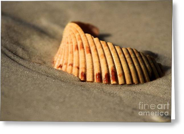 Colored Shell Greeting Cards - Broken Home Greeting Card by Adam Jewell