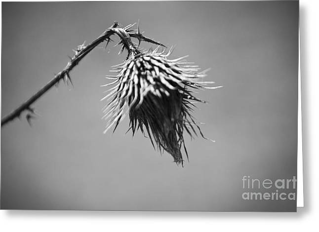 D40 Greeting Cards - Broken Greeting Card by Michael Ver Sprill