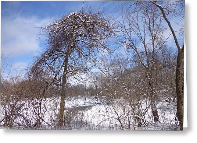 Skys Greeting Cards - Broken Tree Greeting Card by Jacque Hudson
