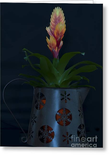 Bromeliad Greeting Cards - Bromeliad 2 Greeting Card by Steve Purnell