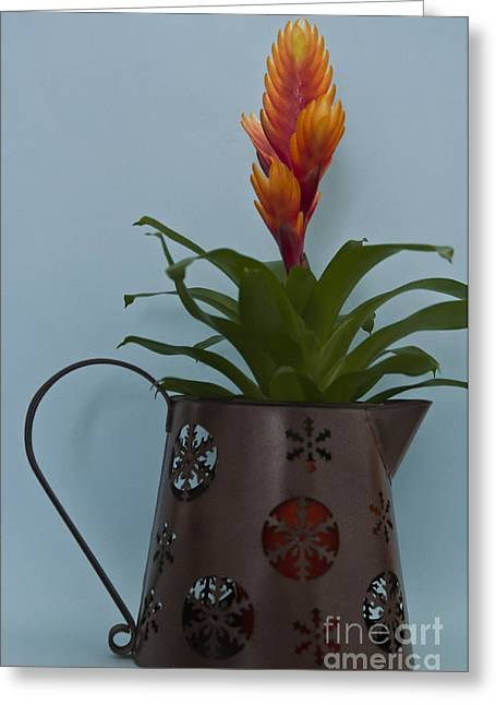 Bromeliad Greeting Cards - Bromeliad 3 Greeting Card by Steve Purnell