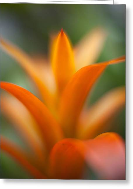 Bromeliad Flow Greeting Card by Mike Reid