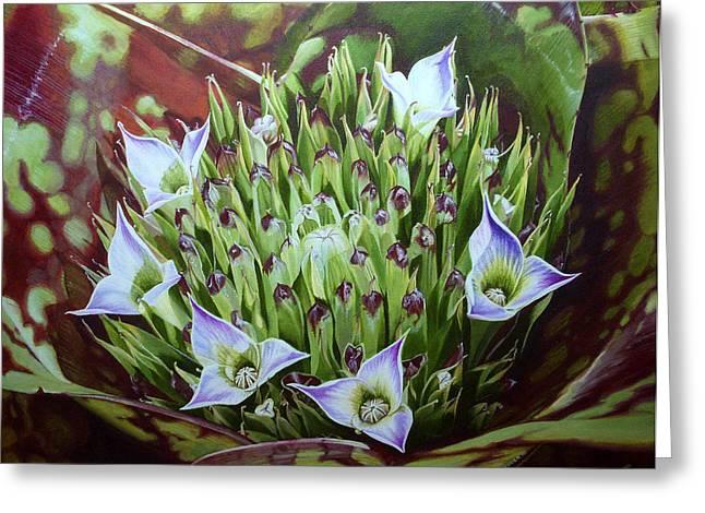 Bromeliad in Bloom Greeting Card by Urszula Dudek