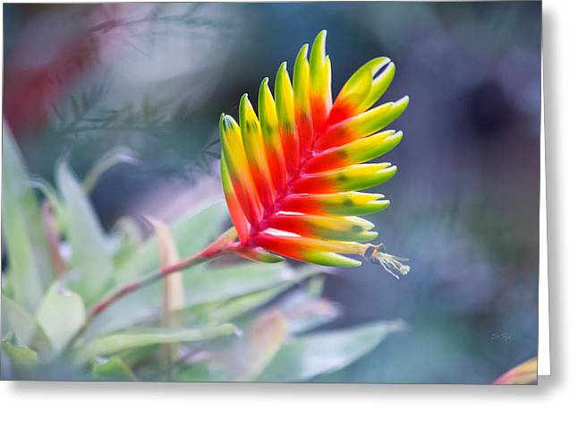 Bromeliad Greeting Cards - Bromeliad symphony  Greeting Card by Eti Reid