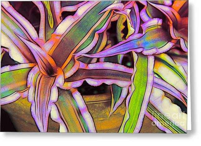 Bromeliad Greeting Cards - Bromeliads Greeting Card by Judi Bagwell