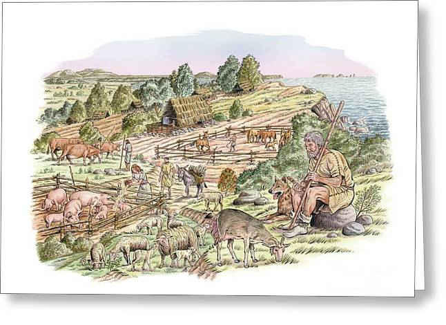 Tending Sheep Greeting Cards - Bronze Age Livestock Farming, Artwork Greeting Card by Luis Montanya/marta Montanya/sciencephotolibrary