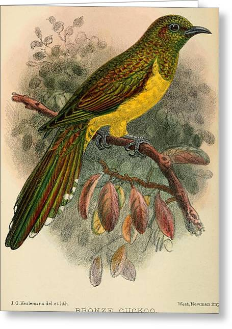 Bronze Greeting Cards - Bronze Cuckoo Greeting Card by J G Keulemans