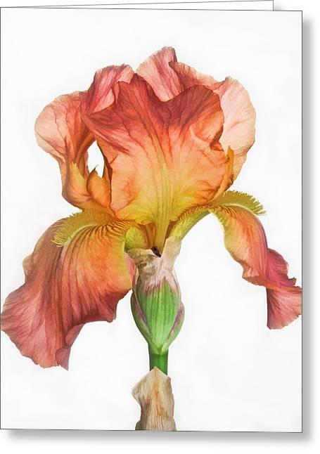 Bronze Iris Greeting Card by David and Carol Kelly