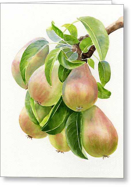 Bronze Greeting Cards - Bronze Pears with white background Greeting Card by Sharon Freeman