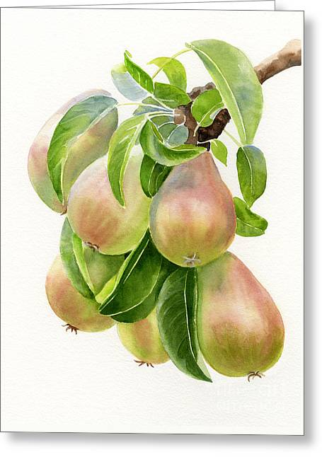 Pear Tree Greeting Cards - Bronze Pears with white background Greeting Card by Sharon Freeman
