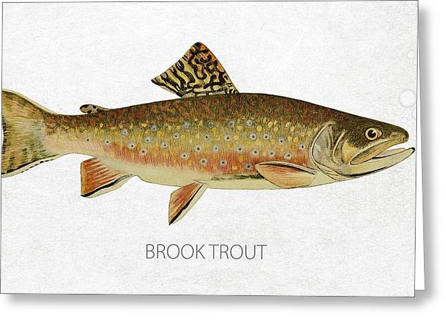 Salmon Digital Greeting Cards - Brook Trout Greeting Card by Aged Pixel