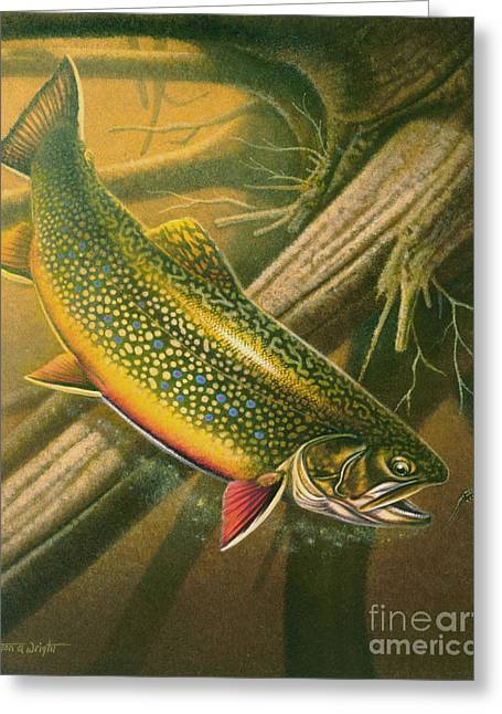 Jon Q Wright Brook Trout Fly Fishing Fly Fish Fishing Nymph Stream River Lake Greeting Cards - Brook Trout  Hideaway Greeting Card by Jon Q Wright