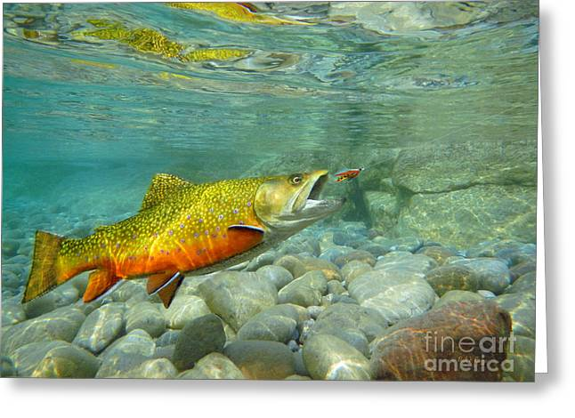 Fly Fishing Art Print Greeting Cards - Brookie with wet fly Greeting Card by Paul Buggia