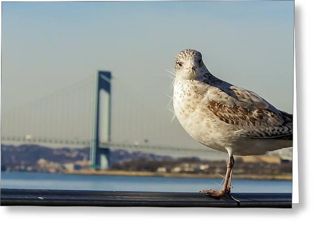 Brooklyn Seagull Greeting Card by Jon Woodhams