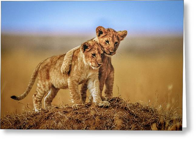 Brothers For Life Greeting Card by Jeffrey C. Sink