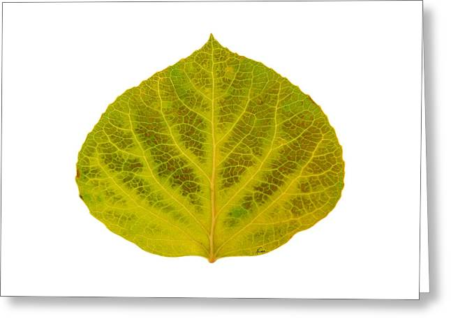 Fall Glass Art Greeting Cards - Brown and Green Aspen Leaf 2 Greeting Card by Agustin Goba