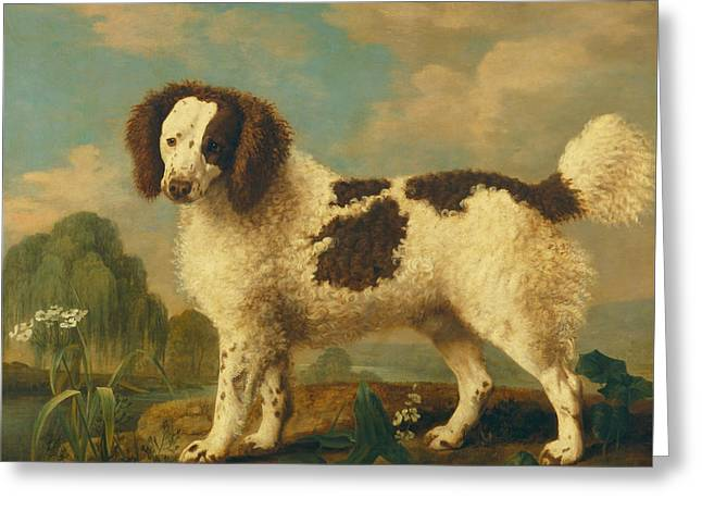 Spaniel Greeting Cards - Brown and White Norfolk or Water Spaniel Greeting Card by George Stubbs