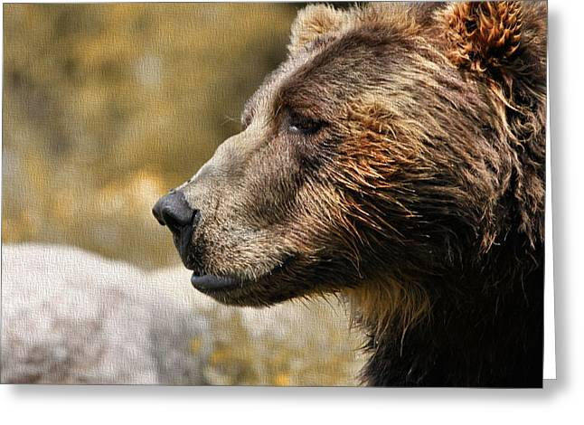 Face In Profile Greeting Cards - Brown Bear Golden Morning Greeting Card by Dan Sproul