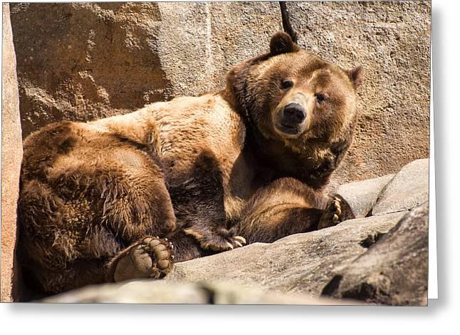 Brown Bear Digital Greeting Cards - Brown Bear is fully awake Greeting Card by Chris Flees