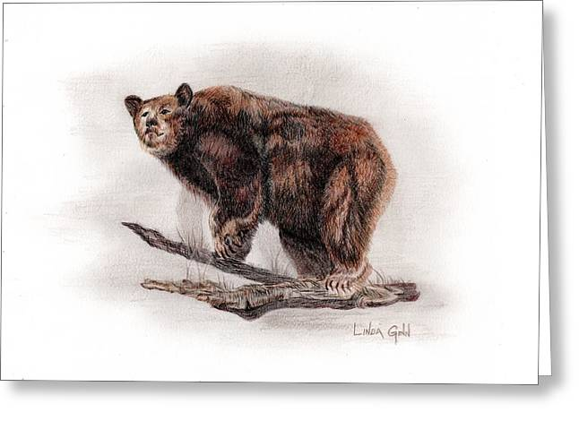 Wild Life Drawings Greeting Cards - Brown Bear Greeting Card by Linda Ginn