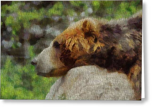 Kodiak Greeting Cards - Brown Bear Napping On Canvas Greeting Card by Dan Sproul