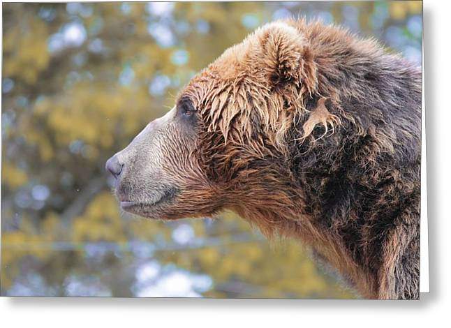 Face In Profile Greeting Cards - Brown Bear Smile Greeting Card by Dan Sproul