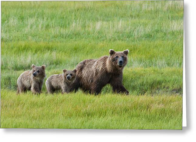 Harts Greeting Cards - Brown Bear Sow Walks With Her Cubs Greeting Card by Cathy Hart