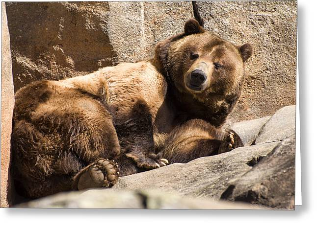 Animal Pics Greeting Cards - Brown bear winks Greeting Card by Chris Flees