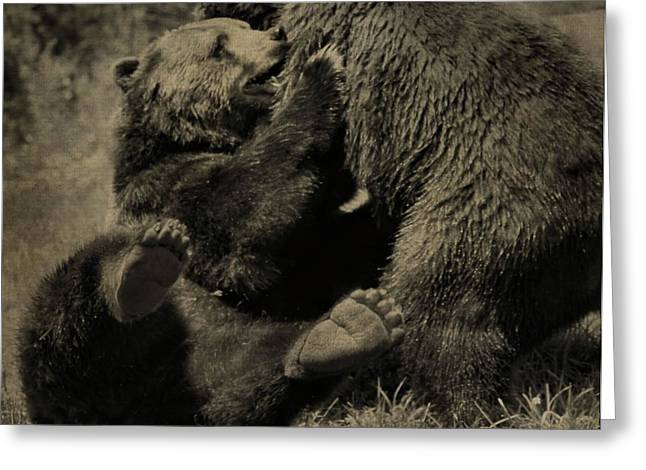 Kodiak Greeting Cards - Brown Bears Fighting Greeting Card by Dan Sproul