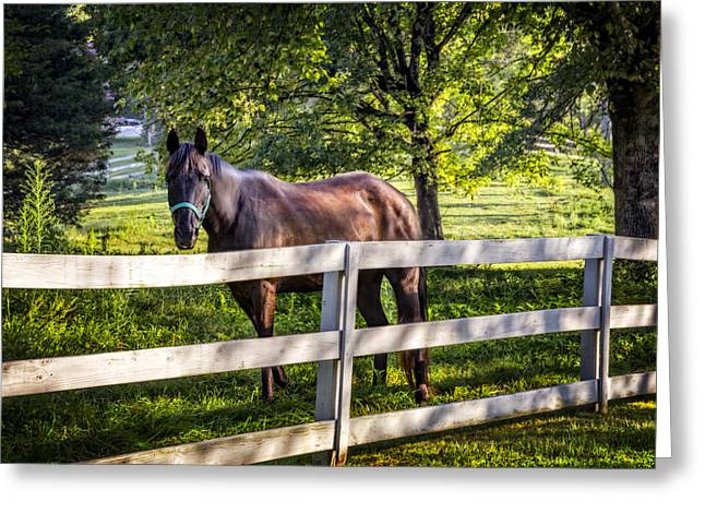 Lone Horse Photographs Greeting Cards - Brown Beauty Greeting Card by Debra and Dave Vanderlaan