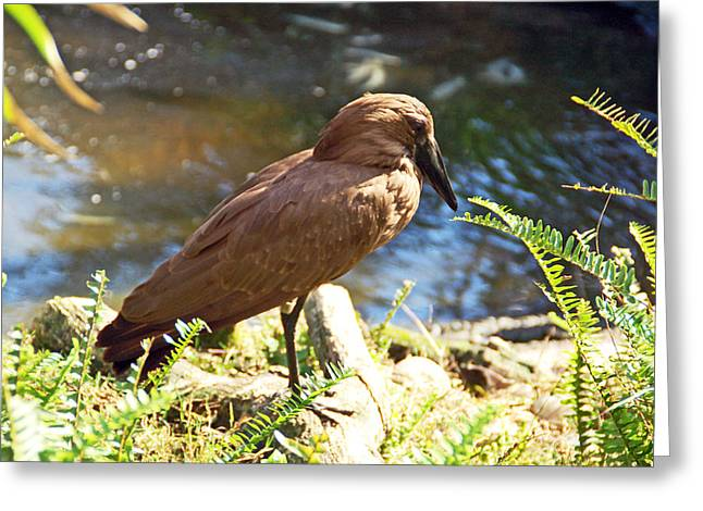 Free Greeting Cards - Brown Bird Greeting Card by Aimee L Maher Photography and Art