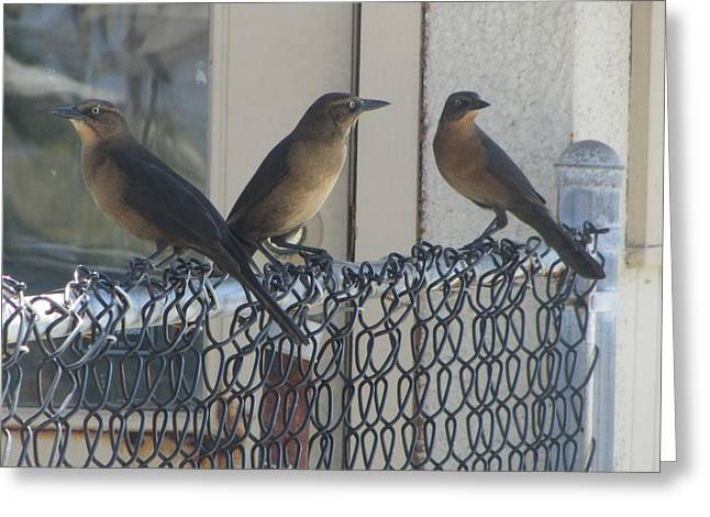 Brown Birds At Fernandina Beach Greeting Card by Cathy Lindsey