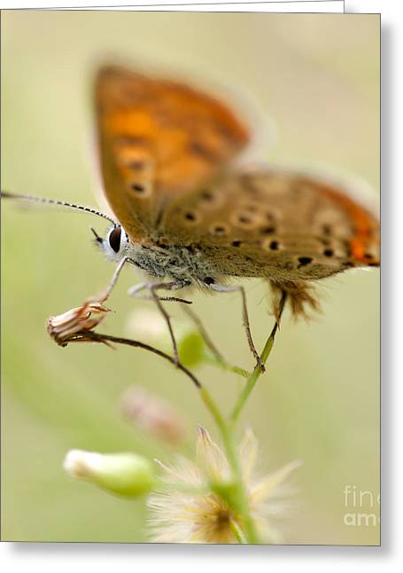 Antena Greeting Cards - Brown blurry butterfly  Greeting Card by Jaroslaw Blaminsky