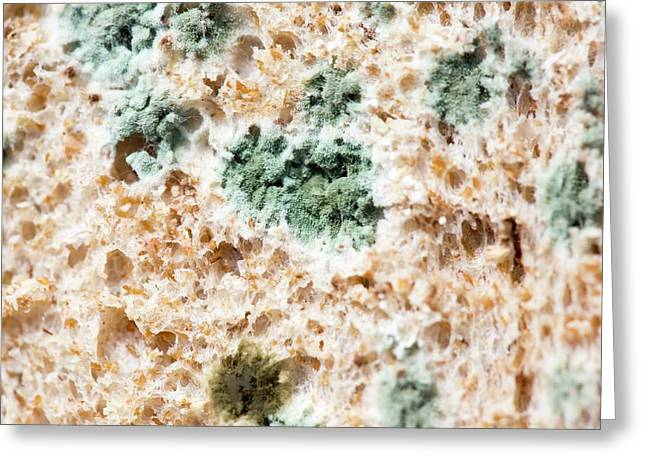 Brown Bread Going Mouldy Greeting Card by Ashley Cooper