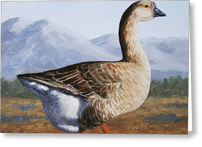 Swans... Greeting Cards - Brown Chinese Goose Greeting Card by Crista Forest