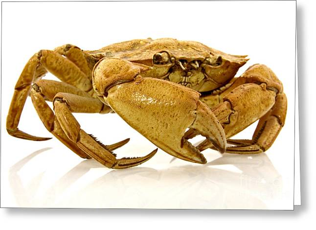 Recently Sold -  - Sea Animals Greeting Cards - Brown Crab  Greeting Card by G J