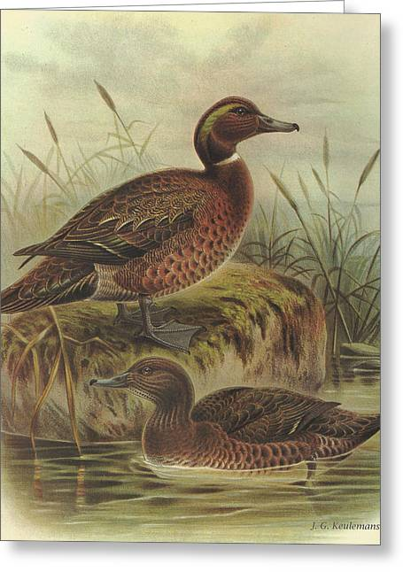 Flightless Greeting Cards - Brown Duck and Auckland Island Flightless Duck Greeting Card by J G Keulemans