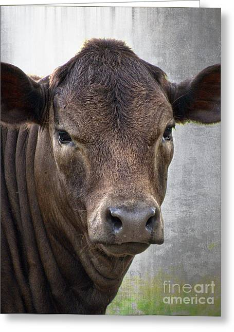 Moos Print Greeting Cards - Brown Eyed Boy - Calf Portrait Greeting Card by Ella Kaye Dickey