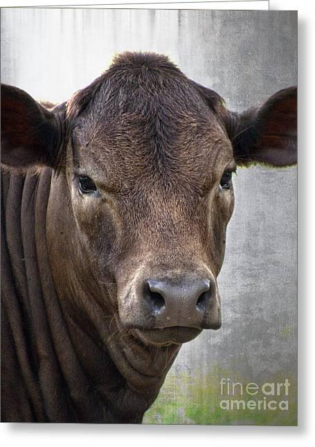 Print Greeting Cards - Brown Eyed Boy - Calf Portrait Greeting Card by Ella Kaye Dickey
